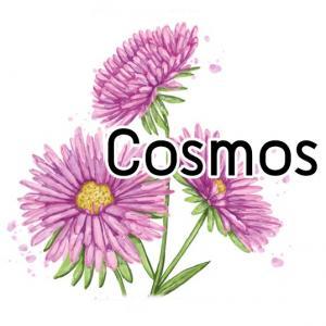 Cosmos น้ำมันหอม คอสมอส