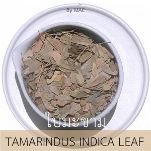 TAMARINDUS INDICA LEAF ใบมะขามแห้ง