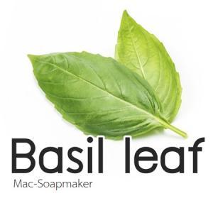 BASIL LEAF /Sweet Basil/ น้ำมันหอมระเหยโหระพา