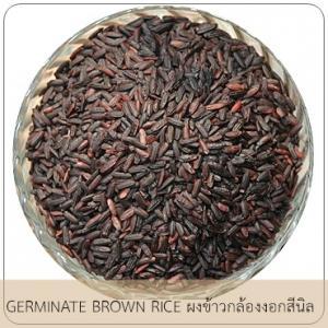 GERMINATE BROWN RICE ผงข้าวกล้องงอก สีนิล(บดหยาบ)