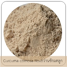 Curcuma comosa Roxb /ว่านชักมดลูก