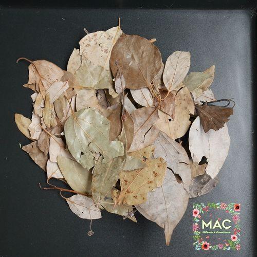 ใบกระวาน (Bay Leaf)