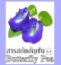 BUTTERFLY PEA EXTRACT สารสกัดอัญชัน