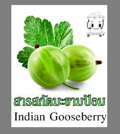 INDIAN GOOSEBERRY EXTRACTสารสกัดมะขามป้อม