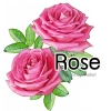 ROSE /หัวน้ำหอมกุหลาบ