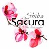 SHIBASAKURA /น้ำมันหอม ชิบะซากุระ /พิงค์มอส (Moss Phlox)