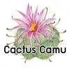 CACTUS CAMU น้ำมันหอม แคคตัส คามู