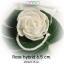 Flower Rose hybrid 6.5 ซม./ดอกกุหลาบม้วน เชือกยาว 15 ซม.