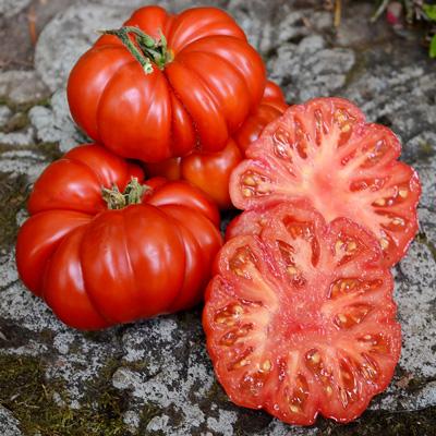 Costoluto Fiorentino Tomato Seed